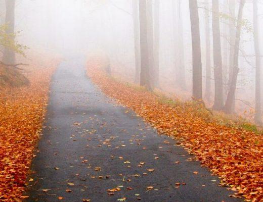 Unpopular Autumn Opinions